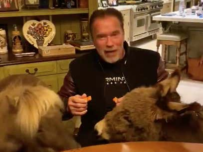 Video: Arnold Schwarzenegger, Miniature Pony, And Donkey Give Virus PSA From His Kitchen