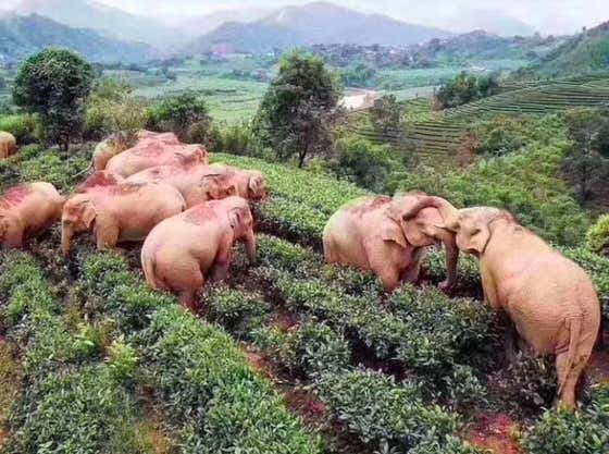 Get A Load Of These Elephants Getting Drunk As Shit While All The Humans Are In Quarantine