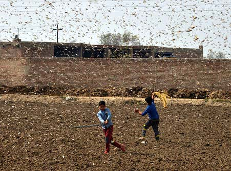 We Might Actually Be In The Apocalypse, Locusts Are Taking Over Egypt And East Africa