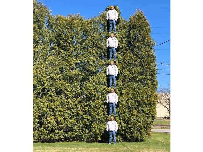 Man Discovers a Brilliant Way to Measure the Trees in His Yard