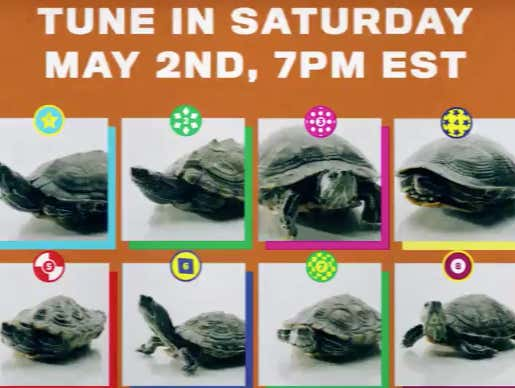 How Is Kentucky Dealing With The Derby Being Postponed On Saturday? Allow Me To Introduce The Kentucky Turtle Derby
