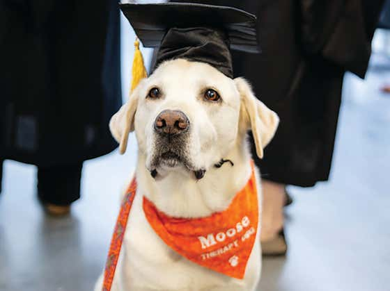 Virginia Tech Awards Honorary Doctorate To Moose Davis, A Beloved Campus Therapy Dog