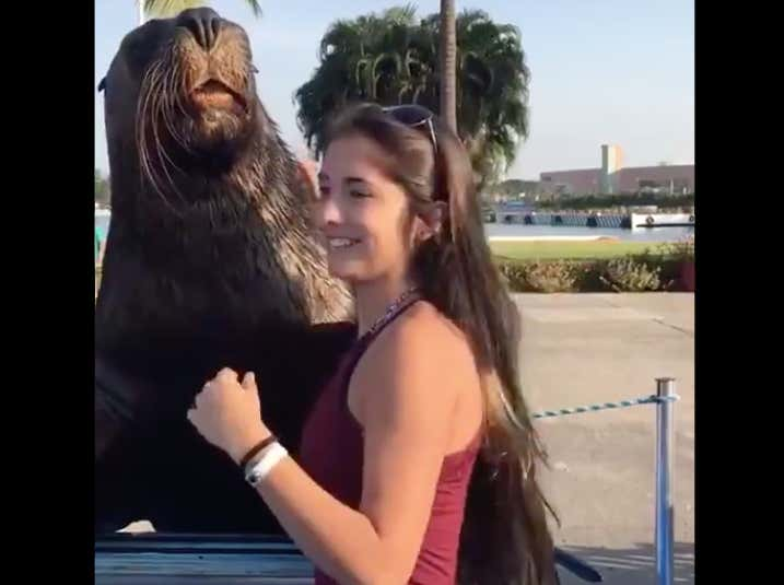 VIDEO: Don't Let This Seal Anywhere Near Your Girl