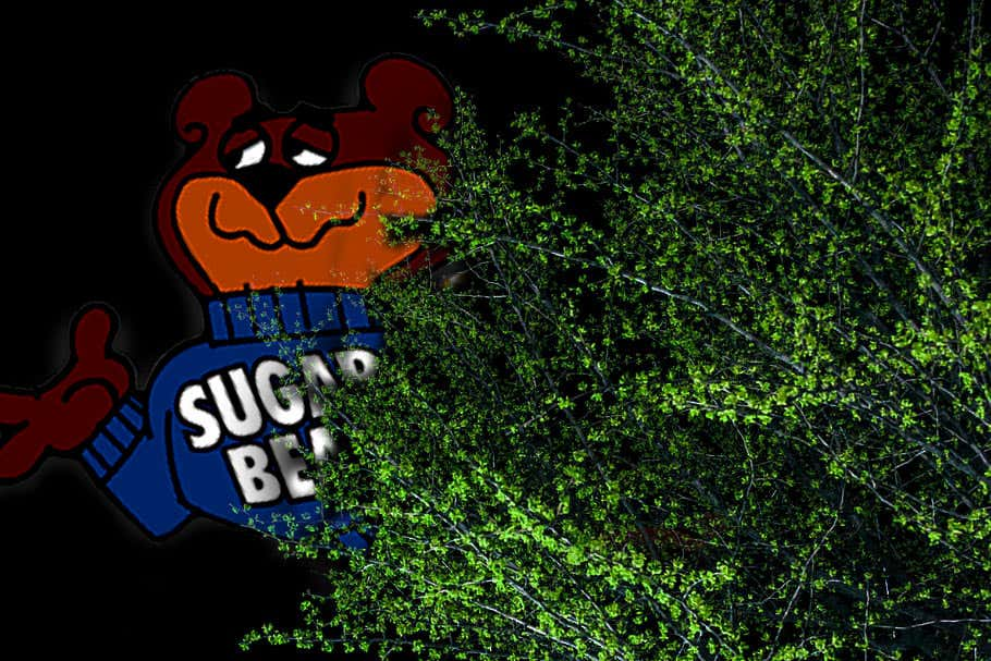 sugar-bear-bushes.jpg
