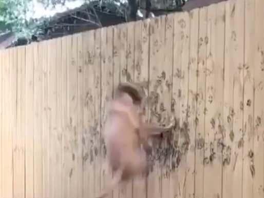Hardcore Barkour