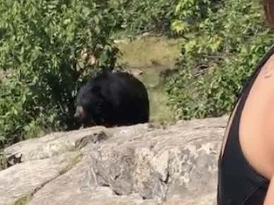They Were Entirely Too Calm With A Bear That Close To Eating Them