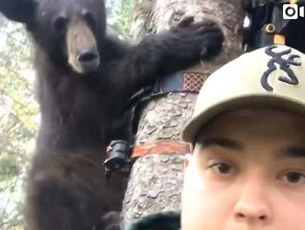 Wild Video Of A Bear Running Up A Hunter's Tree Stand And Staring Him DIRECTLY In The Face