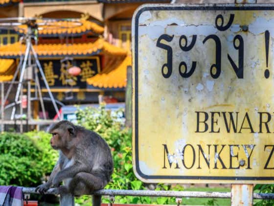 Monkey 'Gangs' Have Taken Over Streets Of Thai City, Bully People Into Giving Them Food