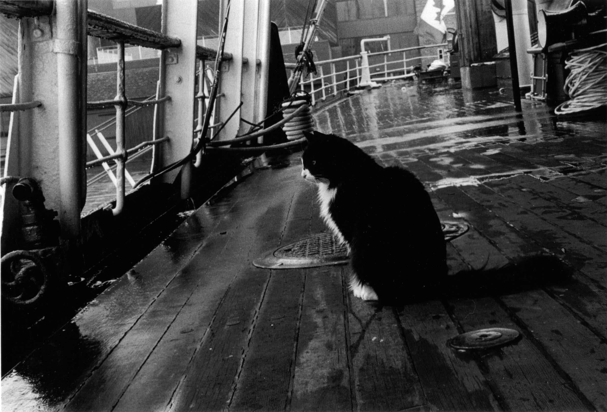 Ships_Cat.png