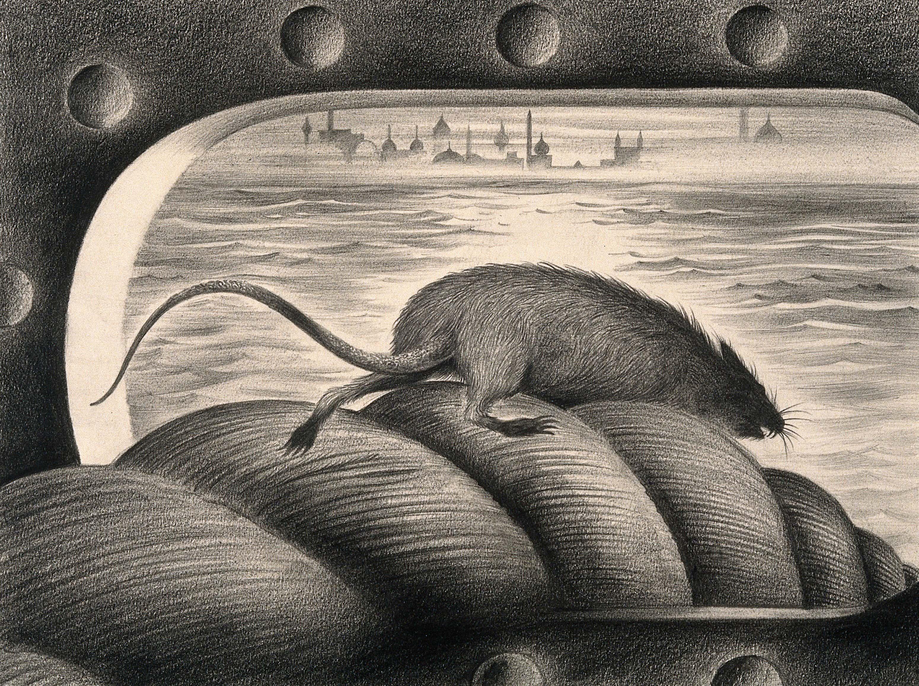 A_rat_leaving_a_ship_via_the_mooring_rope,_thus_spreading_th_Wellcome_V0010685.jpg
