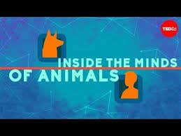 Watch This When You're High - How Do Animals Think?