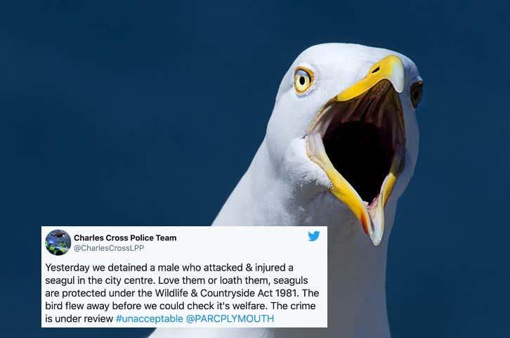 seagull-bite.jpg