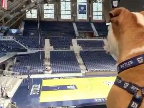 Butler's New Puppy Mascot Is Going Through Game Training And It's The Cutest Goddamn Video Ever On Twitter
