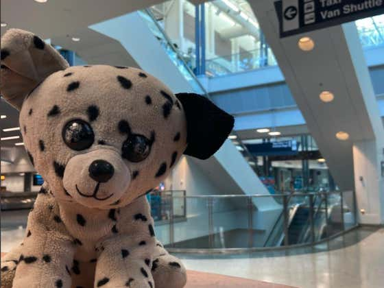 An Airport Launched A Campaign To Reunite A Stuffed Puppy With Its Owner And It's The Best Story You'll Hear All Week