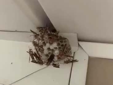 Man Vs. Wasp Nest - Who Ya Got?