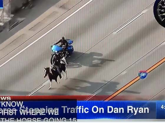 BREAKING: There's A Dude Riding A Horse On The Dan Ryan