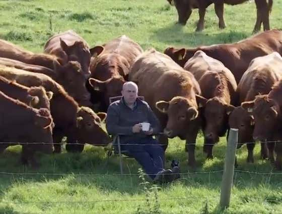 This Guy Sipping Coffee And Hanging Out With His Cows As He Watches The Irish Open Is A King