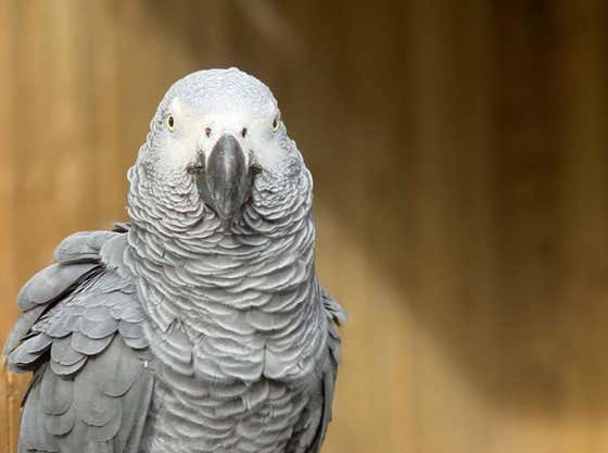 """Five Parrots Have Become The Bad Boys Of A British Zoo Because They Won't Stop """"Cursing Profusely"""" At Guests"""