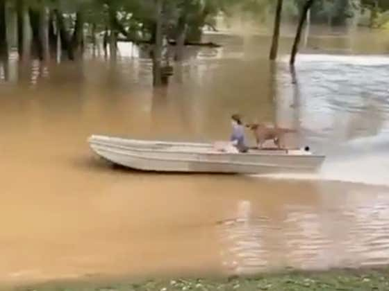 If This Dude Crashes With This Dog In The Boat We Can Never Forgive Him