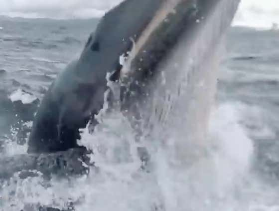 VIDEO: Whale Tries To Re-Enact The Jonah Story From The Bible