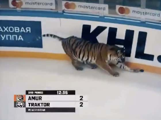 This Tiger Doesn't Have What It Takes To Get Greasy In The Corners And Win Those Loose Puck Battles