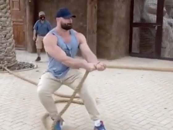 What's The Point Of Having All Those Muscles If You're Just Going To Get Worked By A Lion In Tug Of War?