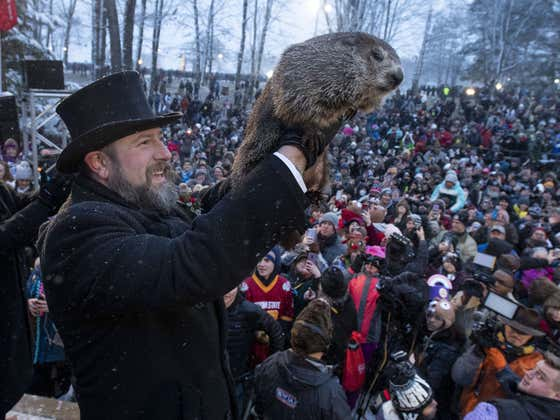 It Is With A Heavy Heart That I Announce Punxsutawney Phil's Groundhog Day Festivities Will Take Place Virtually With No Crowd Due To COVID-19
