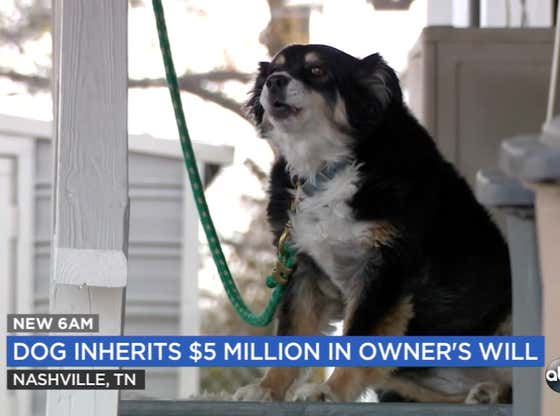 Old Man Fucks His Family Out Of $5 MILLION By Leaving All Of His Money To His Dog