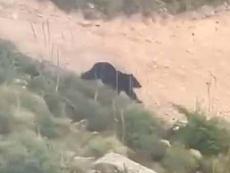 Wild Video Of A Bear Chasing (and almost catching) A Mountain Biker Riding Down A Trail