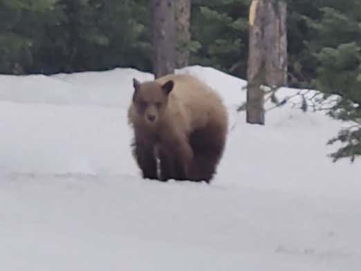 We've Got ANOTHER Video Of A Guy Being Stalked By A Hungry Bear And This One Is Scarier Than The First