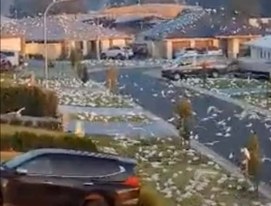 Today In Australia Is Terrifying: An Australian Suburb Has Been Invaded By Thousands Upon Thousands Of Cockatoos