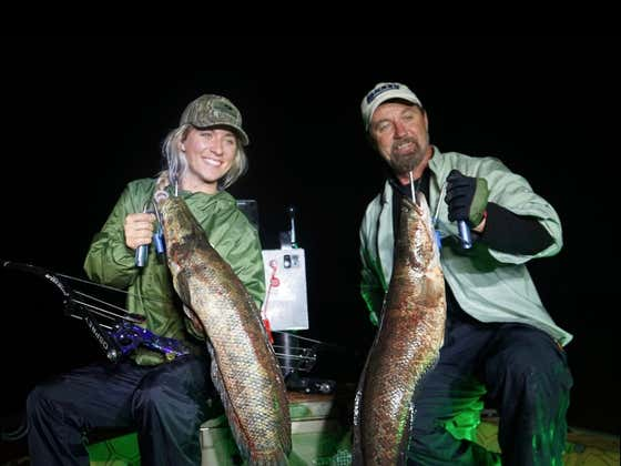 Snakeheads, A Vicious Invasive Species We Hunted for on the Chesapeake Bay