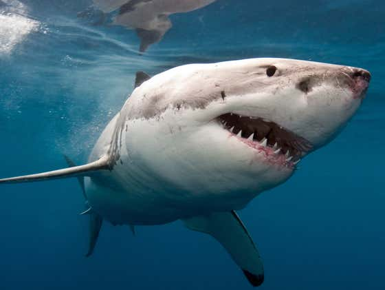 3,000 Years Old With 790 Injuries: Archeologists Find Oldest Known Negative Shark Interaction Victim