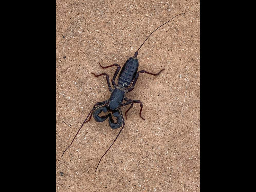 Giant Land Lobsters, From The Depths Of Hell, That Shoot Acid From Their Tails, Are Overtaking Texas After Record Rainfall