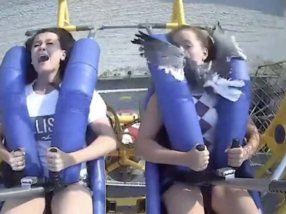 Wildwood Lady Takes A Seagull To The Face And Reacts WAY Too Nonchalantly For My Liking