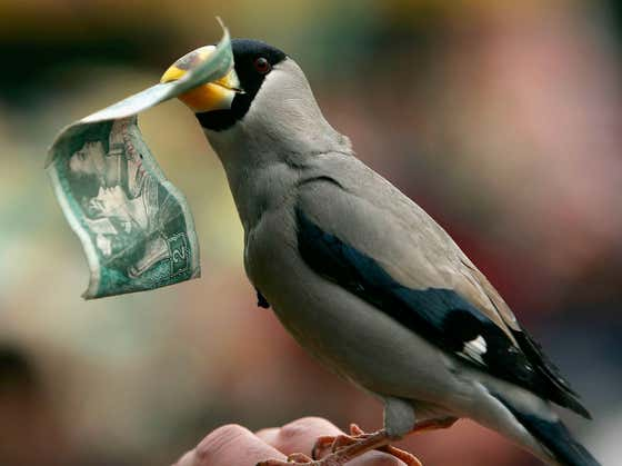 Scientists Say That Birds Make People As Happy As Money Which Proves My Study That Science Needs To Be Defunded