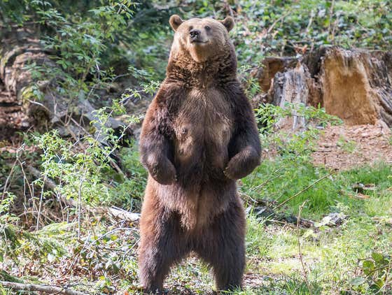 This Guy In Alaska Surviving Multiple Nights Of Grizzly Bear Attacks Deserves A Movie Deal ASAP