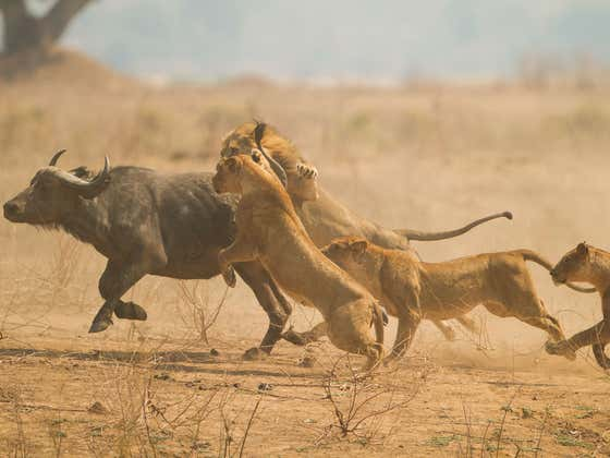 No Disrespect To Tyson Fury But The Battle At Kruger Is The Greatest Fight Of My Life