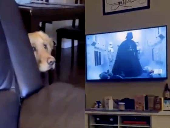 Darth Vader TERRIFIES Poor Golden Retriever Just Trying To Chill On The Couch