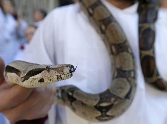 Resourceful: Manchester Man Uses Snake As Mask On Public Bus