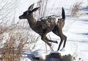 855091_0506_loca_stolen_deer