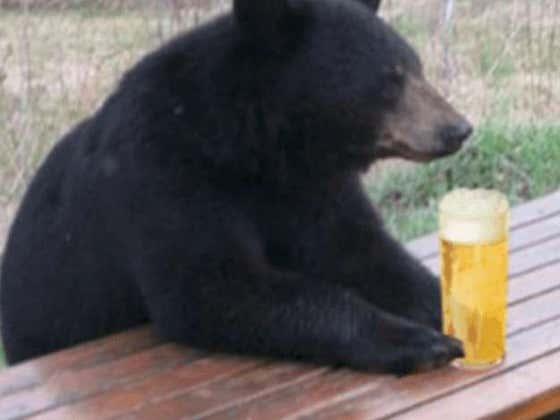 Thirsty Bear Crashes CT Liquor Store