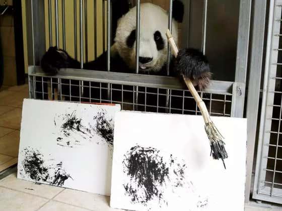 Meet 'Yang Yang' The Painting Panda And Rising Star Of The Art Community