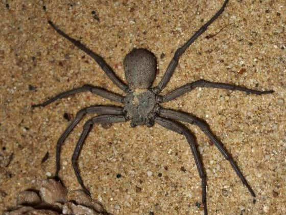 World's Most Venomous Spider Among 7,000+ Bugs Stolen From Philly Insectarium