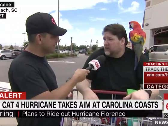How The Hell Did This CNN Reporter Not Ask This Guy About The Parrot On His Shoulder?