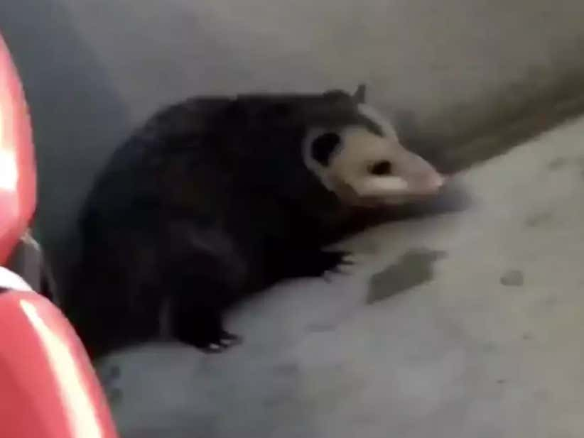 MMBM: The Browns Should Have Named The Possum Their Starting