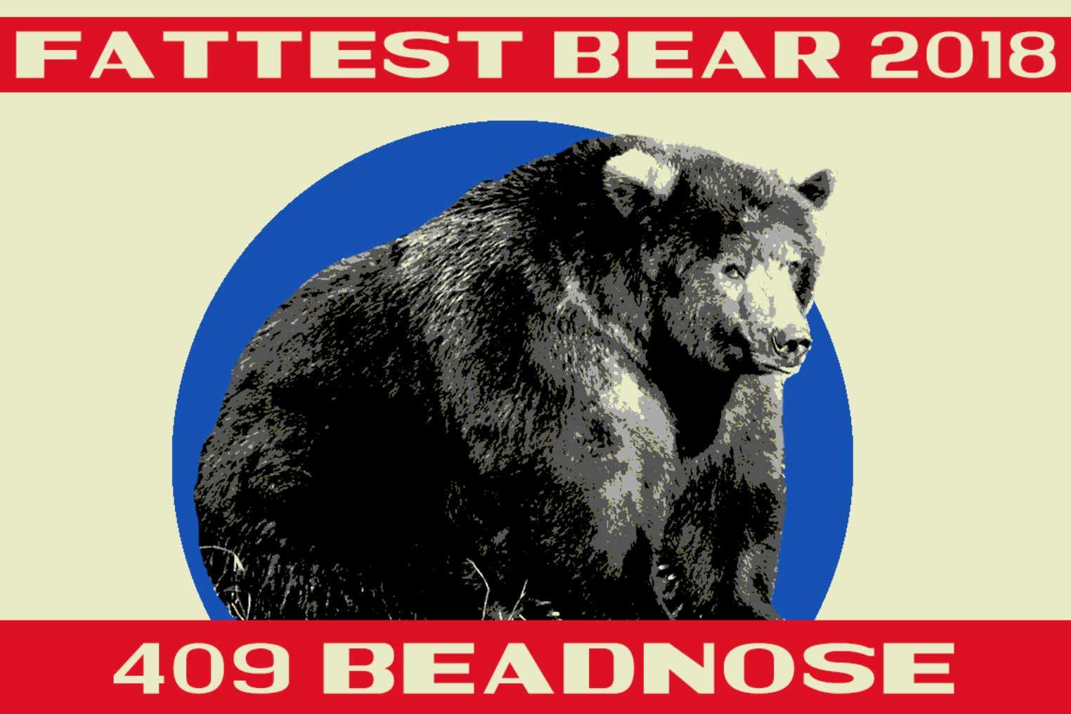 Bear canadian chubby