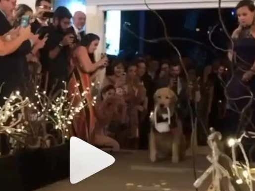 This Handsome Good Boy Walked Down The Aisle And Completely Stole The Show