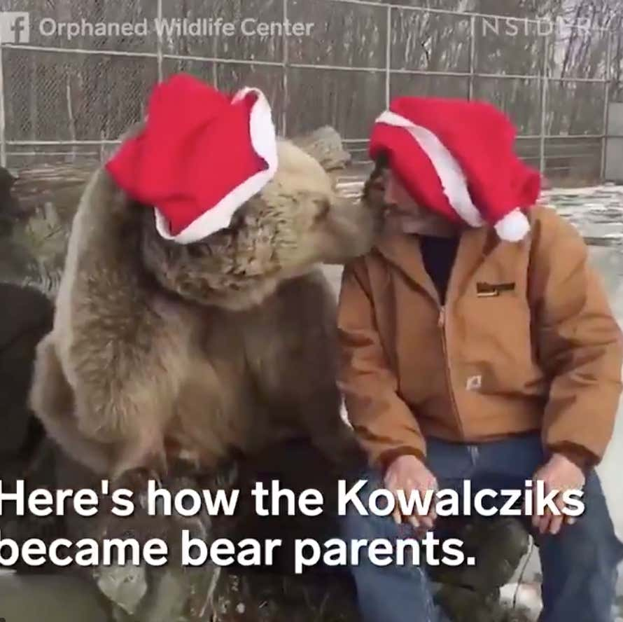 Everything Saw This Image On My Facebook Feed Is It: These Adorable, Orphaned Bears Are The Cutest Thing You'll