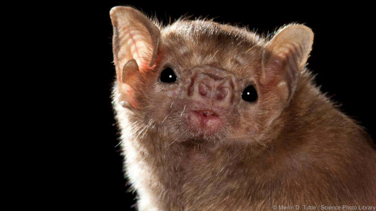White Nose Syndrome Is Back And Better Than Ever Killing Millions Of Bats Despite Scientists Best Efforts